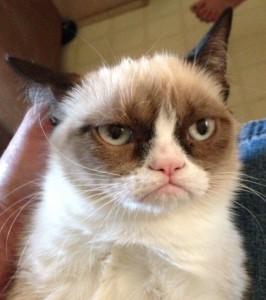 579757_1_grumpy-cat-04